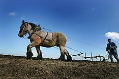 Brabander trekpaard 2006