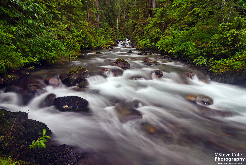 Summertime on Bagley Creek - North Fork Nooksack River Valley