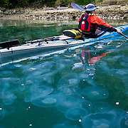 Leslie Palotas paddles her Sea Kayak through a smuck of common jelly fish (non-stinging variety), Marlborough Sounds, South Island, New Zealand. Photo by Jen Klewitz