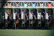 November 3, 2018: Breeders' Cup Horse Racing World Championships. Horses break from the gate in the Breeders' Cup Mile (Race 8) (Turf)