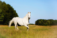 Best for Horses