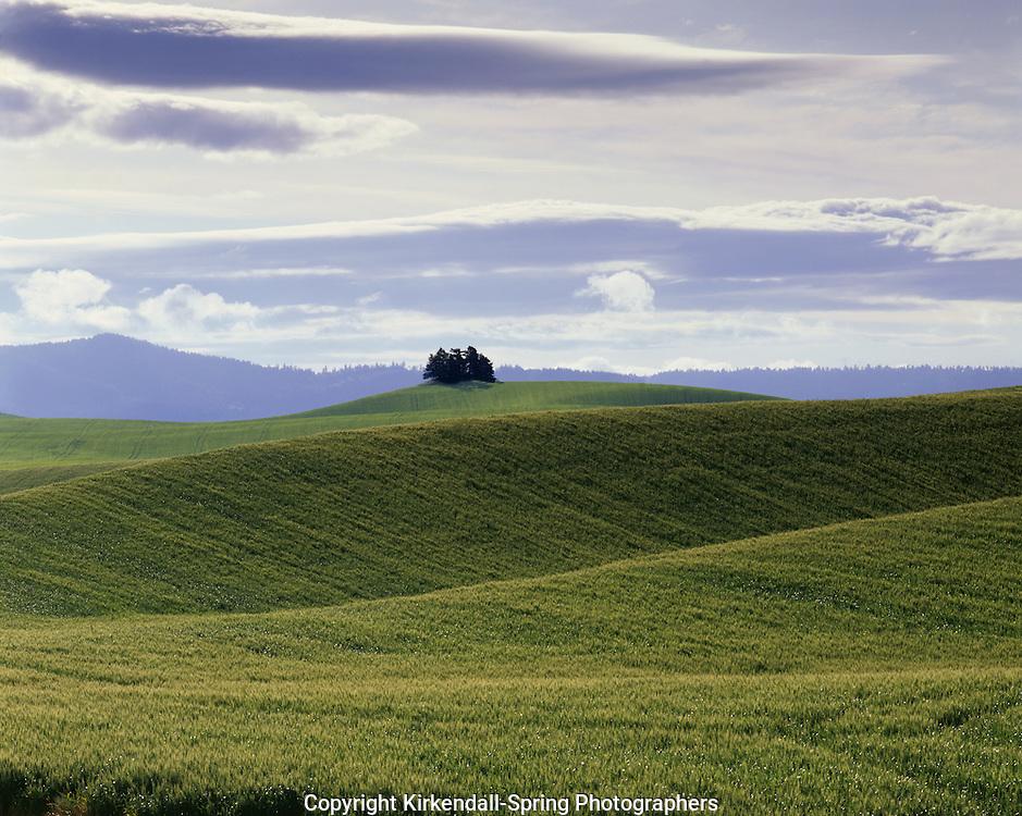 AA07301-02...WASHINGTON - Wheat fields in the fertile Palouse Region of Eastern Washington.