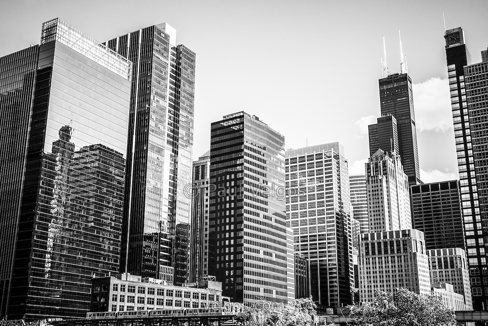 Downtown Chicago buildings black and white picture. Includes the famous Willis Tower (Sears Tower) skyscraper and other popular Chicago buildings. Willis Tower is one of the world's tallest skyscrapers and is a fixture in the Chicago skyline.