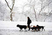Dog walker Jonathan Reos walks thru Central Park in New York City.<br />