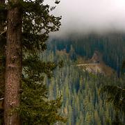 Trees and cloud - Mt. Rainier National Park, WA