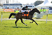 MOLLY THE DOLLY (4) ridden by Harry Skelton and trained by Dan Skelton winning The Class 2 J & D Pierce Novices Champion Handicap Steeplechase over 3m (£100,000)during the Scottish Grand National race day at Ayr Racecourse, Ayr, Scotland on 13 April 2019.