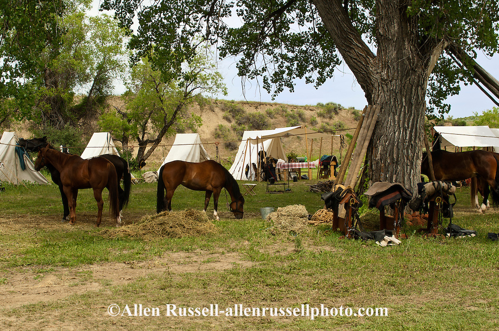 Horse camp, tied on high line, Battle of the Little Bighorn Reenactment, Crow Indian Reservation, Montana