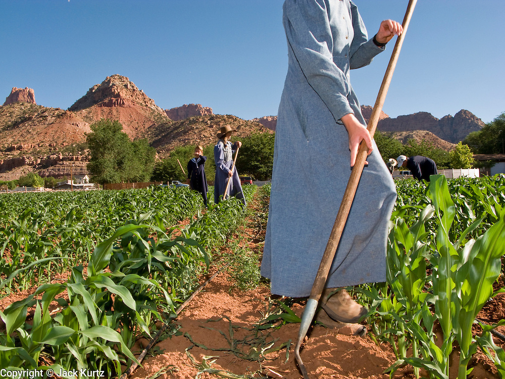 """June 16, 2008 -- COLORADO CITY, AZ: Members of the Jessop family, a polygamous family and members of the FLDS in Colorado City, AZ, weed the community corn field. The family grows about 30 percent of the food they consume and buy the rest at the town mercantile store. Colorado City and neighboring town of Hildale, UT, are home to the Fundamentalist Church of Jesus Christ of Latter Day Saints (FLDS) which split from the mainstream Church of Jesus Christ of Latter Day Saints (Mormons) after the Mormons banned plural marriage (polygamy) in 1890 so that Utah could gain statehood into the United States. The FLDS Prophet (leader), Warren Jeffs, has been convicted in Utah of """"rape as an accomplice"""" for arranging the marriage of teenage girl to her cousin and is currently on trial for similar, those less serious, charges in Arizona. After Texas child protection authorities raided the Yearning for Zion Ranch, (the FLDS compound in Eldorado, TX) many members of the FLDS community in Colorado City/Hildale fear either Arizona or Utah authorities could raid their homes in the same way. Older members of the community still remember the Short Creek Raid of 1953 when Arizona authorities using National Guard troops, raided the community, arresting the men and placing women and children in """"protective"""" custody. After two years in foster care, the women and children returned to their homes. After the raid, the FLDS Church eliminated any connection to the """"Short Creek raid"""" by renaming their town Colorado City in Arizona and Hildale in Utah. A member of the Jessop family weeds the community corn plot in Colorado City, AZ. The Jessops are a polygamous family and members of the FLDS.   Photo by Jack Kurtz"""