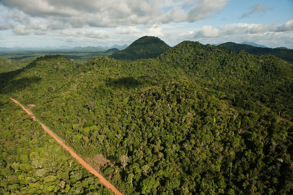 Aerial View of Rainforest & road<br /> Iwokrama Reserve<br /> GUYANA<br /> South America