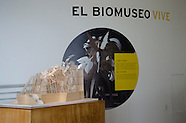 Biomuseo_Exposición temporal