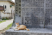 Aoshima, Ehime prefecture, September 4 2015 - A cat lazing near the donator list for the island.<br /> Aoshima (Ao island) is one of the several « cat islands » in Japan. Due to the decreasing of its poluation, the island now host about 6 times more cats than residents.