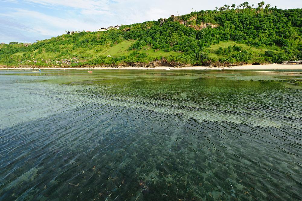 Seaweed farms growing in shallow water, Kutuh, Bali, Indonesia.