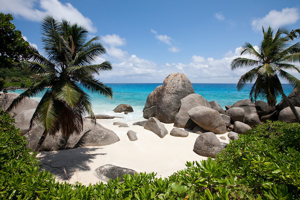 Seychelles, Mahe Island, Palm tree and remote tropical beach along Indian Ocean north of town of Victoria