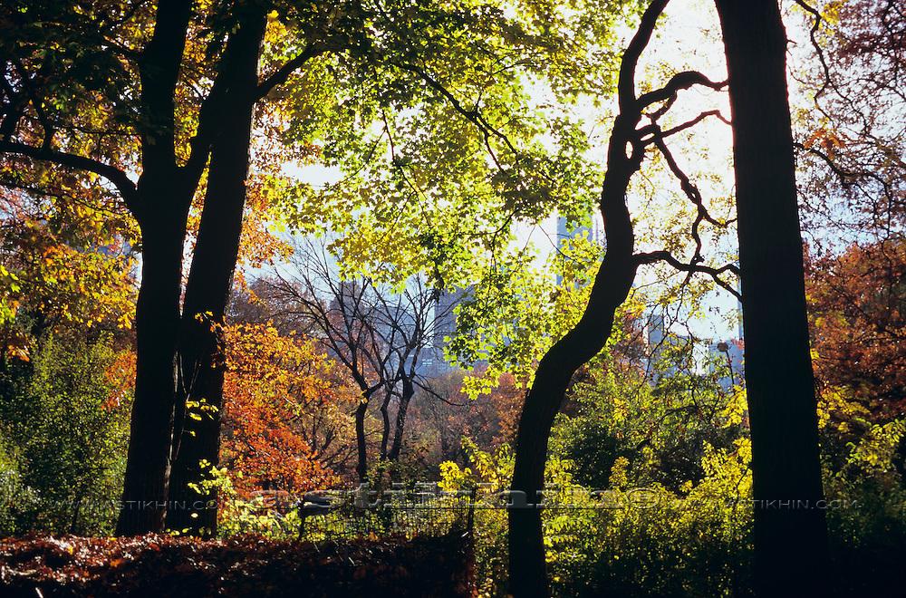 Central Park Manhattan NYC