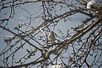 A bird perches on a branch as the morning sun melts the snow off the tree Monday, Feb. 27, 2012 in Coeur d'Alene, Idaho.