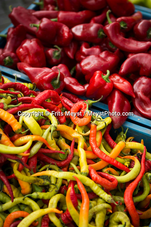 Trebic, Moravia, Czech Republic, September 2015. Peppers and pumpkins on the market. Třebíč, the town of UNESCO monuments is situated in West Moravia, on the southeast tip of the Vysočina region. Třebíč lies on both banks of the river Jihlava. The beginnings of the town are connected to a remarkable Benedictine monastery which was founded by Moravian princes in 1101. Owing to the rich history of the town, visitors can admire a lot of valuable monuments; the most notable ones, the Basilica of St. Procopius , the Jewish Quarter and the Jewish Cemetery are included in the prestigious UNESCO's list of world cultural and natural heritage.  Moravia is most famous for its wine,  rolling hills and pretty landscapes. Photo by Frits Meyst / MeystPhoto.com