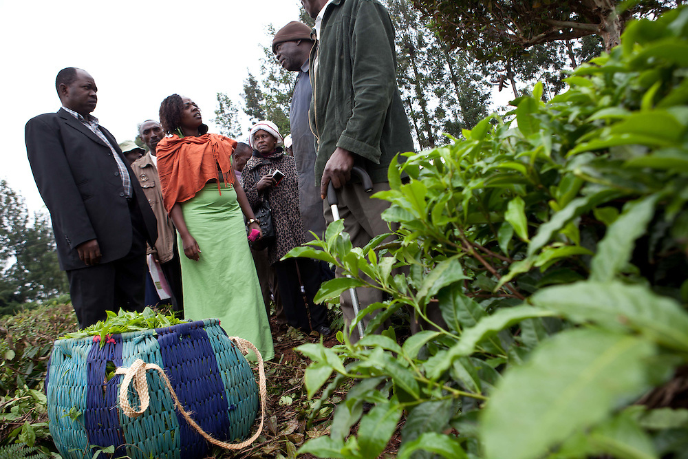 Local counselors and tea farm workers speak with Cathy about the conditions of tea farms during a visit to the Gathambara Tea Collection & Buying Centre near Othaya, Kenya.  Cathy's interest and passion for improving economic opportunities through agriculture was rooted during her childhood while growing up on her father's farm in Nyeri County.