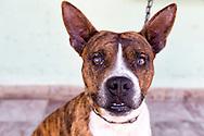 Dog in Holguin, Cuba.
