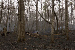 A managed fire by the National Parks Service Kings Mountain National Military Park near Blacksburg, South Carolina, March 14, 2008.