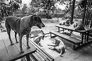 A dog stands on a picnic table at the Yangon Animal Shelter.