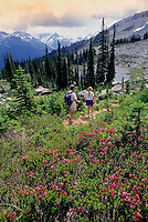 Two hikers walk the trail to Singing Pass, on Whistler Mountain, BC Canada
