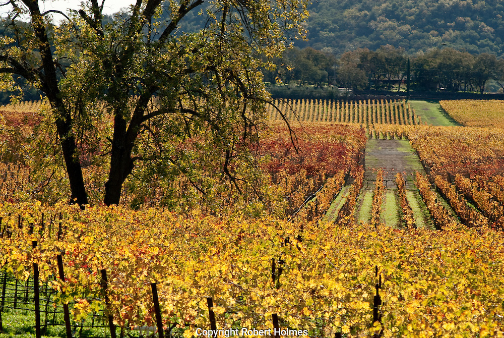 Vineyards on the Silverado Trail, Napa Valley, California