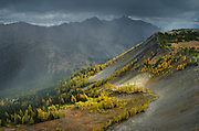 Subalpine Larches on slopes near Slate Peak, Pasayten Wilderness, North Cascades Washington