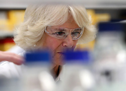 The Duchess of Cornwall, known as the Duchess of Rothesay in a research lab at the Centre for Arthritis and Musculoskeletal Health during a visit to Aberdeen UniversityÕs School of Medicine, Medical Sciences and Nutrition.