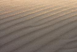 Sand dune, Monahans Sandhills State Park, Texas, USA.Monahans Sandhills State Park, Texas, USA.