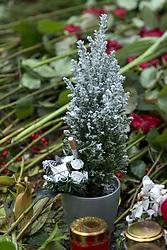 """THEMENBILD - Helmut Heinrich Waldemar Schmidt war ein deutscher Politiker der SPD. Von 1974 bis 1982 war er als Regierungschef einer sozialliberalen Koalition der fünfte Bundeskanzler der Bundesrepublik Deutschland, Hannelore """"Loki"""" Schmidt, geborene Glaser war eine deutsche Pädagogin und die Ehefrau von Helmut Schmidt, die sich durch ihre Leidenschaft für Biologie und Natur auch als Botanikerin, Natur- und Pflanzenschützerin betätigte. Hier im Bild In einer Pflanze steckt eine Zigarette auf der Grabstaette Helmut Schmidt. Aufgenommen am 26. Dezember 2015 in Hamburg. // Helmut Heinrich Waldemar Schmidt was a German politician of the SPD. From 1974 to 1982 he served as head of government of a social-liberal coalition, the fifth Chancellor of the Federal Republic of Germany, Hannelore """"Loki"""" Schmidt, nee Glaser was a German teacher and the wife of Helmut Schmidt, who, through their passion for biology and natural as a botanist natural and Pflanzenschützerin operated. in this picture cigarettes in a grave light on the tomb Helmut Schmidt. Hamburg, Germany on 2015/12/26. EXPA Pictures © 2016, PhotoCredit: EXPA/ Eibner-Pressefoto/ Hommes<br /> <br /> *****ATTENTION - OUT of GER*****"""