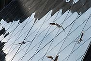 France. Paris. 1st district. Louvre museum.  the Louvre Pyramid  , in the Louvre museum courtyard / La pyramide du musee du Louvre. / Architecte, PEY. to use the picture you have to contact the EPGL etablissement public du grand Louvre.