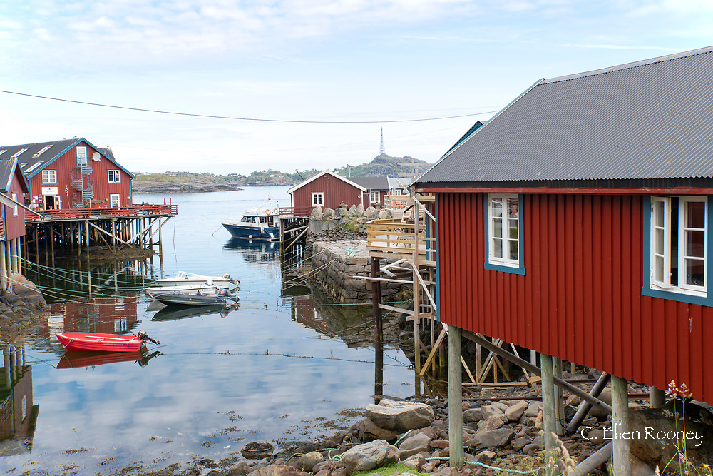 Colourful rorbu, fishermen's cottages in the village of A on Vest Fjord, Moskenesoy, the Lofoten Islands, Norway