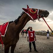 Erbil's international equestrian club