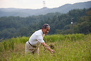 Nobuyoshi Ito, 67, tends to his rice fields in Iitate Village, Fukushima Prefecture, Japan on 08 Sept. 2011.  Despite being advised to evacuate his home due to high radiation levels, Ito has decided to become a human guinea-pig, testing himself and his crops for radiation levels. Photograph: Robert Gilhooly