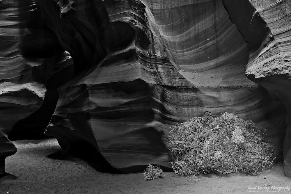 A tumbleweed rests in a corner at the base of Upper Antelope Canyon near Page, Arizona following a windstorm.