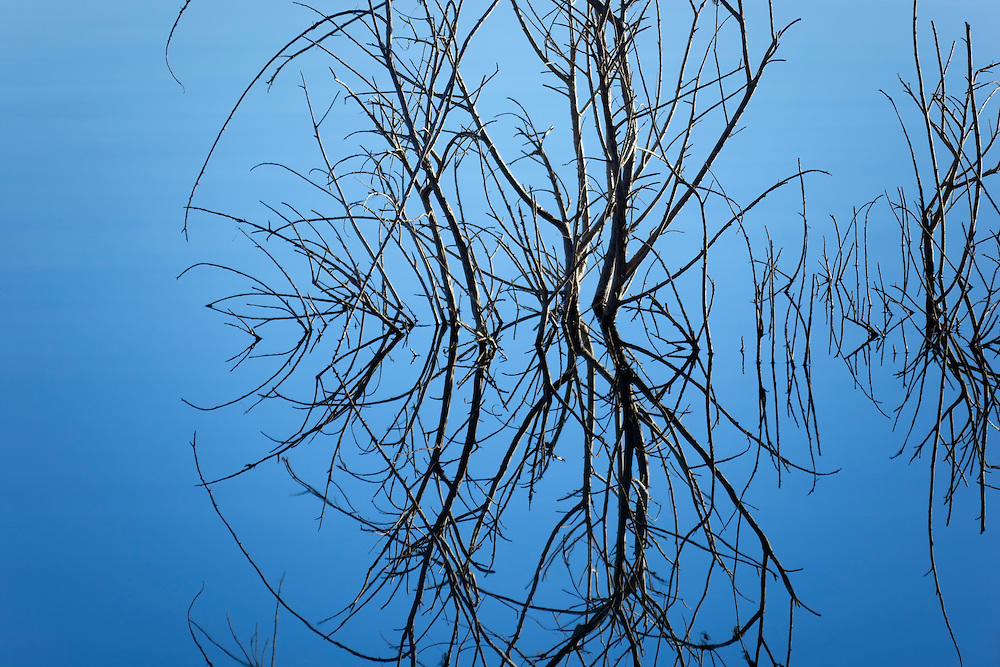 Dry plant with reflections in water.