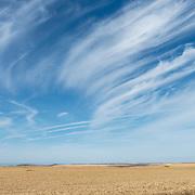 Wheat fields outside of Condon, Oregon.