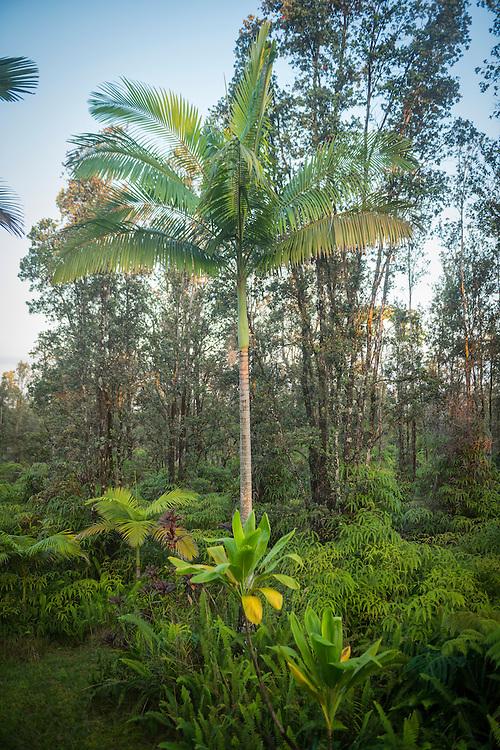 USA, Hawaii, Big Island, Puna, tropical Forest near Hilo