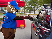 "06 MAY 2020 - DES MOINES, IOWA: ""CUBBIE,"" the mascot for the Iowa Cubs, wears a face mask and practices social distancing while he hands a bottle of hand sanitizer to a motorist in a drive through at Principal Park, the stadium for the Iowa Cubs, the minor league baseball team affiliated with the Chicago Cubs. Two months after the start of the COVID-19 pandemic Iowa retailers still can't keep everyday items like hand sanitizer, toilet paper, and alcohol based cleaning supplies in stock. Many of the artisan distilleries in Iowa have started making and distributing free hand sanitizer.      PHOTO BY JACK KURTZ"
