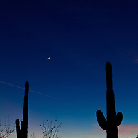 Tonto National Forest - Arizona Desert Landscape