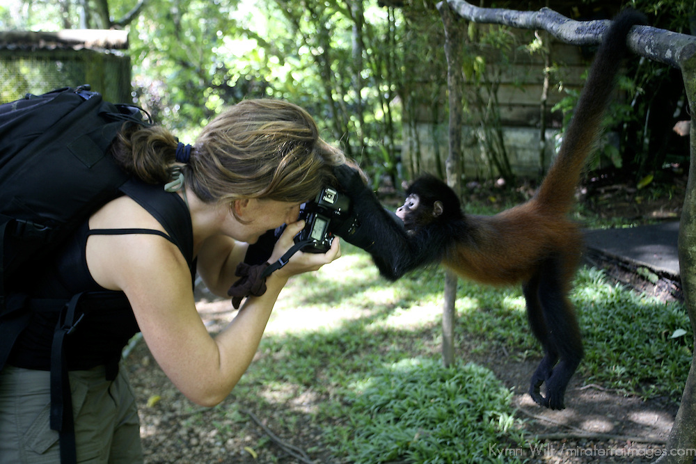 Central America, Latin America, Costa Rica, Golfo Dulce, Cana Blanca Wildlife Sanctuary. Primate encounters - A photographer is taken by surprise when her subject comes in for a true close-up!