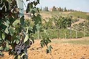 Biondi-Santi Winery, Montalcino, Tuscany, Italy