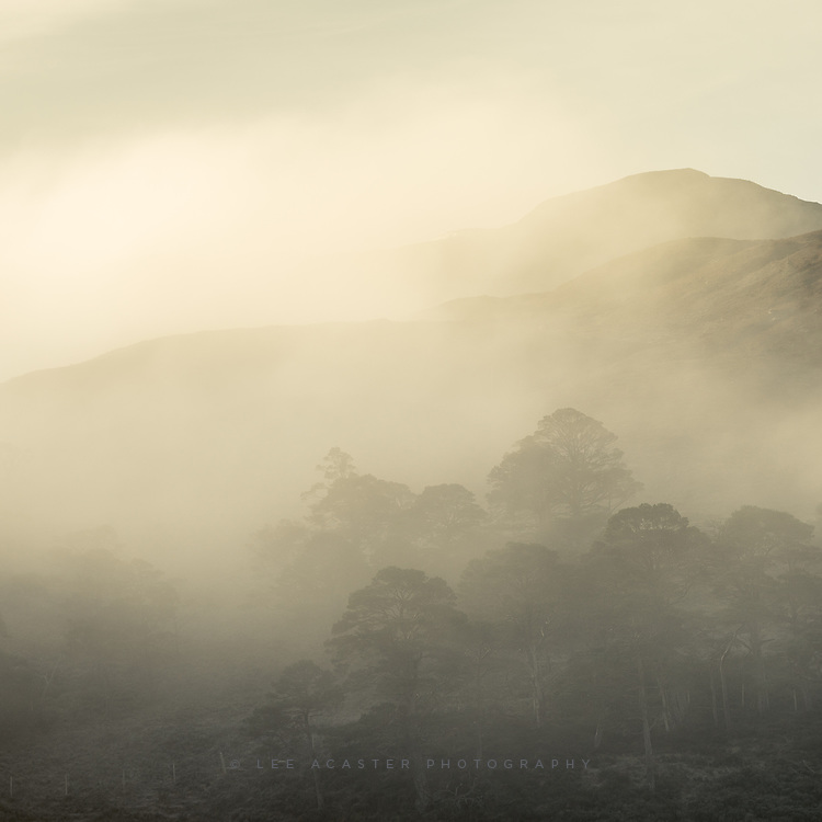 Trees in the mist above Loch Clair, Torridon