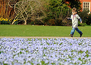 "© Licensed to London News Pictures. 22/03/2012. Kew, UK. A young girl runs past a field full of ""glory of Snow' flowers. People enjoy the spring sunshine in The Royal Botanic Gardens at Kew today, 22 March 2012. Temperatures are set to reach 18 degrees celsius in some parts of the UK today. Photo credit : Stephen SImpson/LNP"