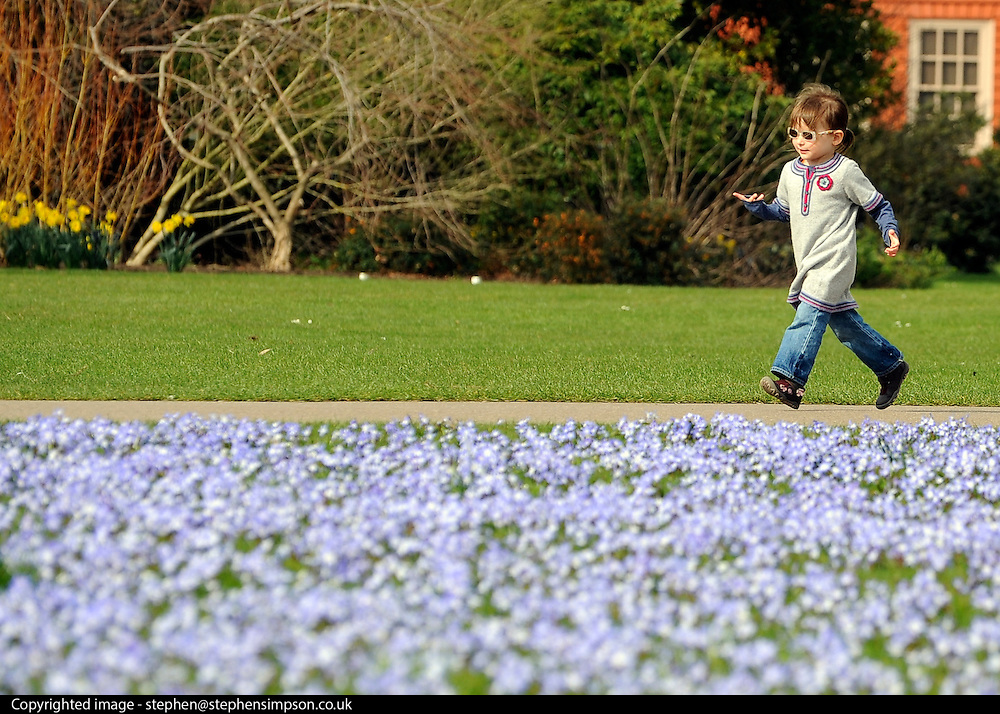 """© Licensed to London News Pictures. 22/03/2012. Kew, UK. A young girl runs past a field full of """"glory of Snow' flowers. People enjoy the spring sunshine in The Royal Botanic Gardens at Kew today, 22 March 2012. Temperatures are set to reach 18 degrees celsius in some parts of the UK today. Photo credit : Stephen SImpson/LNP"""