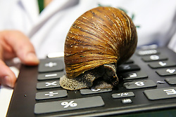 © Licensed to London News Pictures. 02/01/2020. London, UK. A London Zoo keeper with a Giant African Land Snail during the annual stocktake at London Zoo. London Zoo undertakes its annual stocktaking which is carried out at the the start of each year. Every animal in London Zoo is weighed and measured and the statistics is shared with other Zoos across the world. Photo credit: Dinendra Haria/LNP