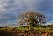 Late autumn in the New Forest near Bolderwood, Hampshire, UK
