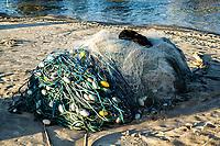Cachorro deitado sobre rede de pesca na Praia de Ponta das Canas. Florianópolis, Santa Catarina, Brasil. / Dog laying on a fishing net at Ponta das Canas Beach. Florianopolis, Santa Catarina, Brazil.