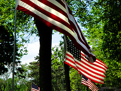 American flags fly on Memorial Day.