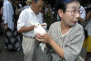 A woman holds a white dove, dozens of which are set free as a symbol of peace at Yasukuni Shrine in Tokyo, Japan. very year on August 15, the day Japan officially surrendered in WWII, tens of thousands of Japanese visit the controversial shrine to pay their respects to the 2.46 million war dead enshrined there, the majority of which are soldiers and others killed in WWII and including 14 Class A convicted war criminals, such as Japan's war-time prime minister Hideki Tojo. Each year speculation escalates as to whether the country's political leaders will visit the shrine, the last to do so being Junichiro Koizumi in 2005. Nationalism in Japan is reportedly on the rise, while sentiment against the nation by countries that suffered from Japan's wartime brutality, such as China, has been further aggravated by Japan's insistence on glossing over its wartime atrocities in school text books...Photographer:Robert Gilhooly..